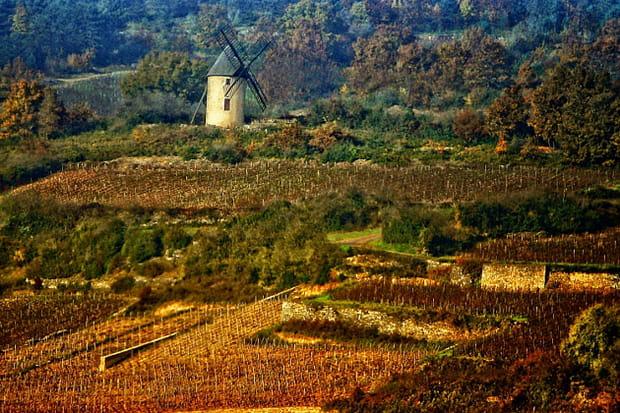 Balade dans les plus beaux vignobles de France