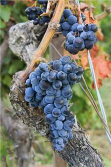 raisins france 1656770665 1412802