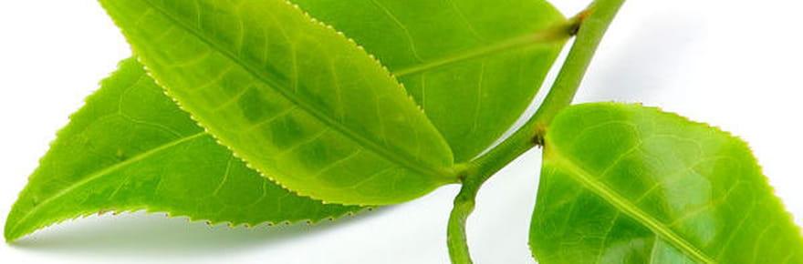 20astuces pour des plantes d'intérieur enpleine santé