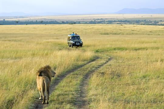 Kenya, Paradis de tous les safaris!