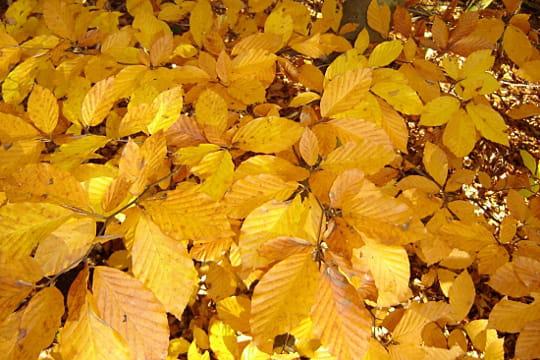 Le jaune de l'automne