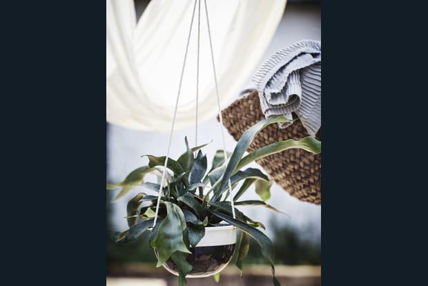 plantes suspendues. Black Bedroom Furniture Sets. Home Design Ideas