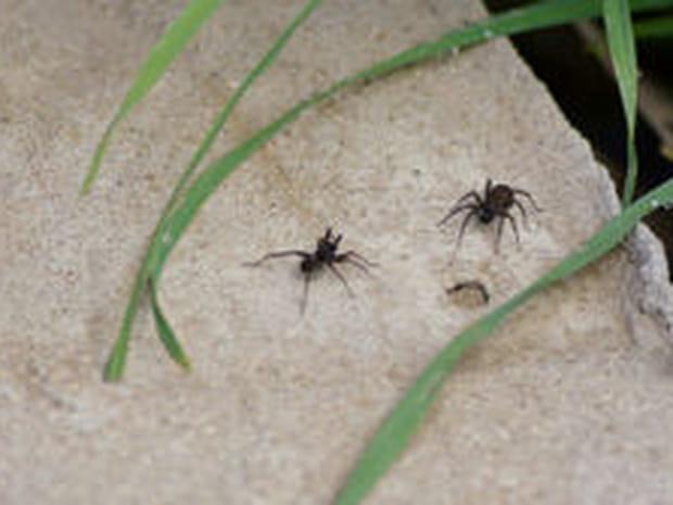 Lutter contre les insectes dans la maison et s'en débarrasser