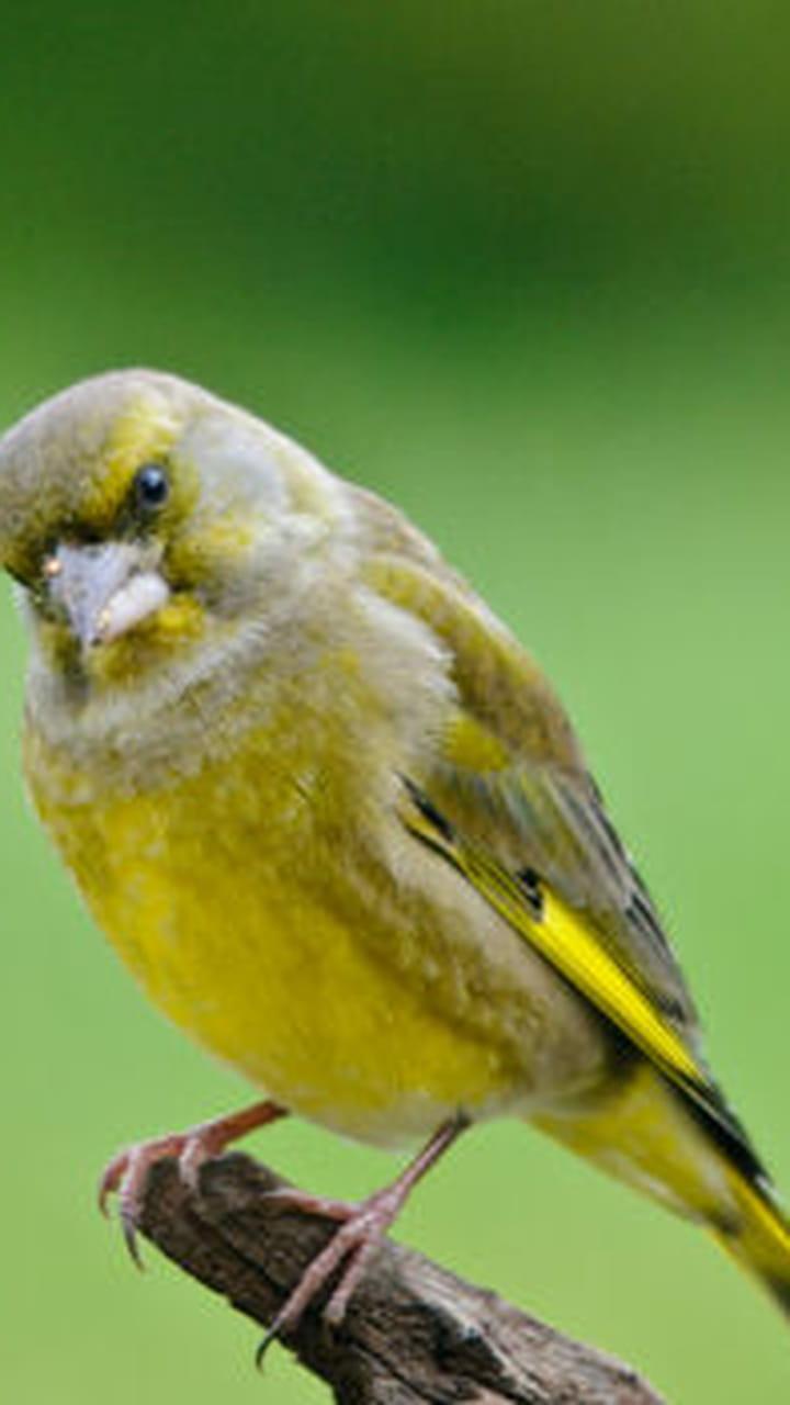 Ces Oiseaux Qui Peuplent Nos Villes
