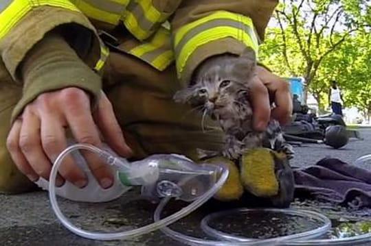 Un sapeur pompier réanime, Lucky, un chaton