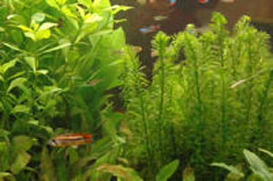 Plante d'aquarium: comment bien la choisir