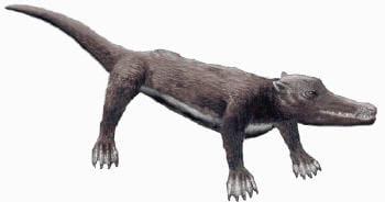 l'animal aurait vécu à l'éocène (de -56 à -34 millions d'années)