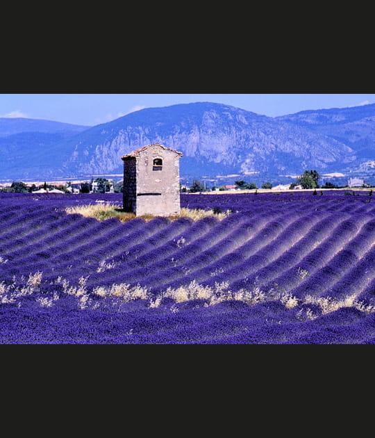 Lavande à perte de vue en Provence