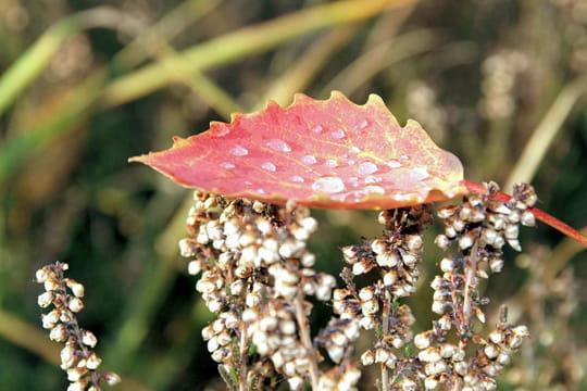 Perles d'automne