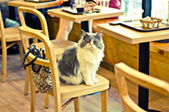 Le Cat Cafe, un bar japonais qui loue des chats