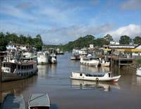Deltas du monde : L'Amazone : un trésor de biodiversité