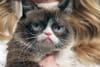 Mort de Grumpy Cat: de quoi est décédé le chat le plus célèbre du Web?
