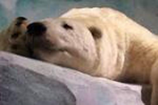 Expliquez-moi la différence entre hibernation et hivernation?