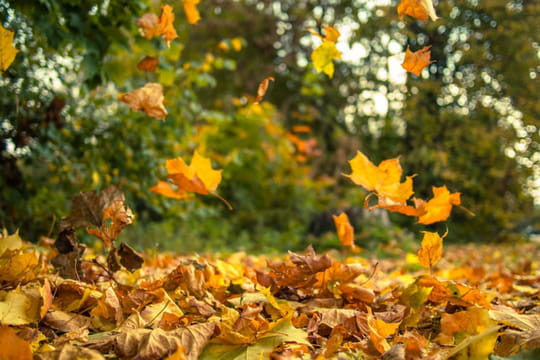 Equinoxe d'automne:les secrets de la décoloration des feuilles