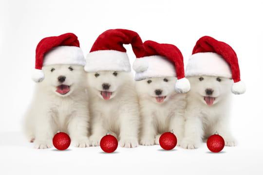 Joyeux Noël: SMS, textes humour, cartes de vœux... tout pour un Noël original!