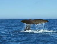 Ushuaïa nature : Les seigneurs des océans (Nouvelle-Zélande)