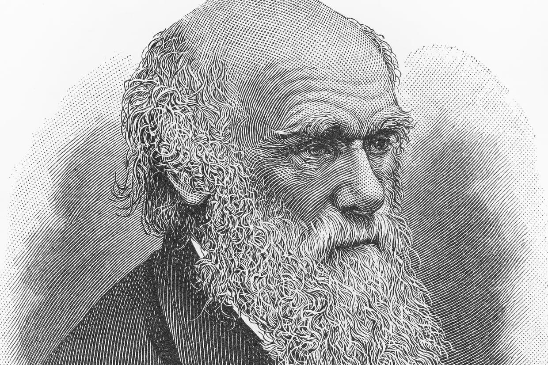 Sites de rencontres en ligne Darwin