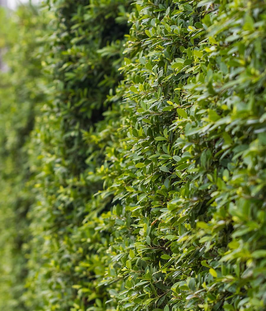 Creer un mur vegetal exterieur 28 images 6 id 233 es pour cr 233 er un mur v 233 g 233 tal Construire mur vegetal exterieur conseils