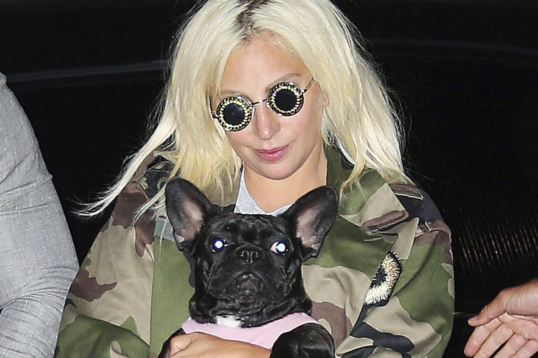 """Lady Gaga: ses chiens volés par un homme armé, la star """"bouleversée"""""""