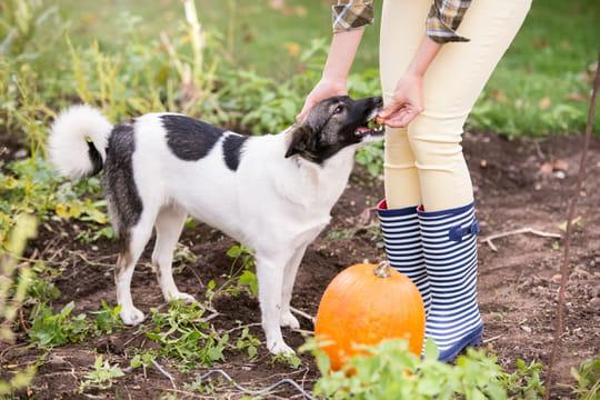 Répulsif pour chien: comment le choisir et l'utiliser