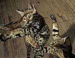 Les secrets de nos animaux domestiques