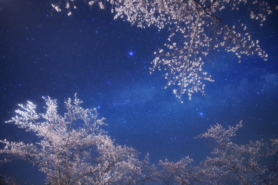Une galaxie en fleurs