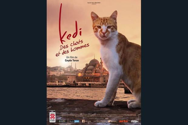 Kedi: des chats et des hommes - Photo 1