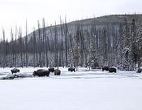 Yellowstone, terres d'extrêmes