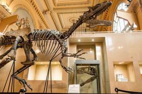 Museum d'histoire naturelle de Paris: horaires, tarifs et infos