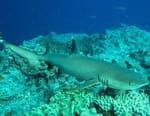 Requins : Le grand déménagement
