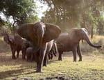 La mémoire des éléphants
