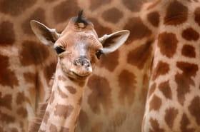 2016 : les plus belles naissances dans les zoos