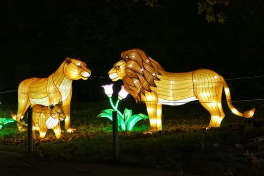 Le festival des lumières, une expérience féerique au Jardin des Plantes