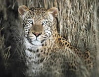 Namibie sauvage : La réserve d'Erindi