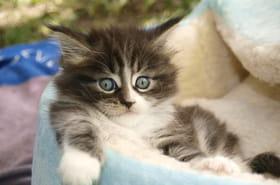 Panier pour chat: bien le choisir, des modèles design et originaux