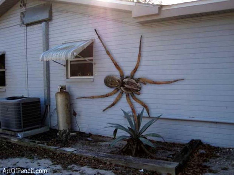 Gigantesque Araign 233 E Tueuse