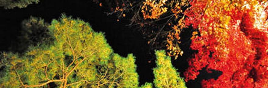 Les plus belles photos du concours Passion Forêt
