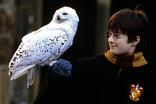 Au Royaume Uni, les chouettes d'Harry Potter sontabandonnées