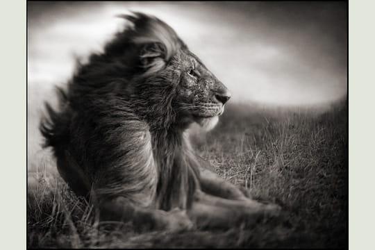 Nick Brandt, portraits rapprochés d'animaux sauvages