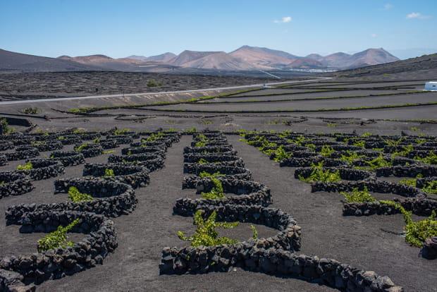 Vignobles de La Geria