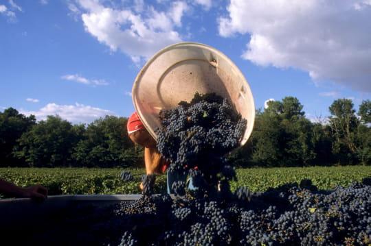 4500bouteilles produites par hectare de vigne