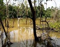 Les mondes inondés : Kinabatangan, l'éden sauvage de Bornéo