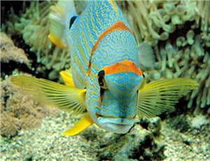 la plupart des poissons sont dépourvus de paupières.