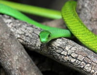 Le paradis des prédateurs : Les grondements de la jungle