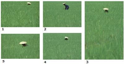 l'objectif ici était de placer le personnage surle fond vert unide la rizière.