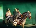 Gorongosa, renaissance d'un royaume