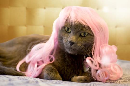 Extravagant les perruques pour chats - Images de chats rigolos ...