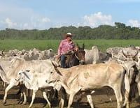 Echappées belles : Brésil : la route des terres conquises