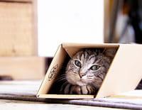 La vie secrète des chats : Que fait mon chat... quand je ne suis pas là