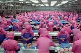 Consommation de masse: la vidéo choc qui fait le buzz